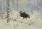 Moose in a Winter Forest
