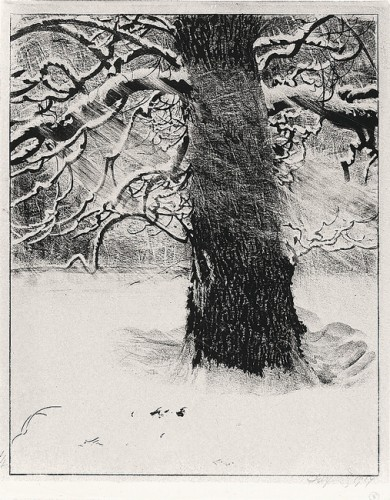 Oak in Snow Storm
